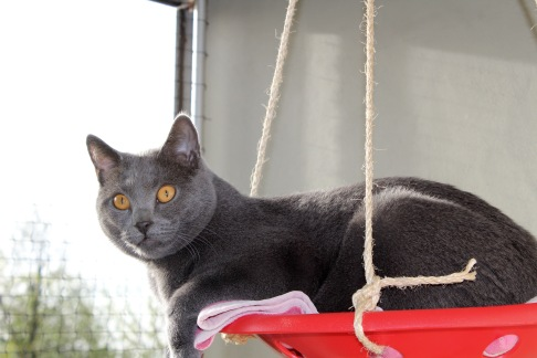 Django neuer Lieblingsplatz auf dem Balkon
