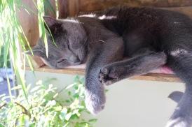 Django kann überall schlafen