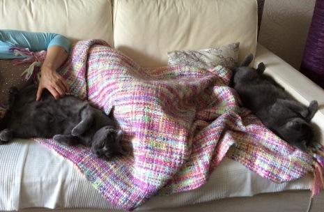 Mittagsschlaf beim Personal auf der Couch