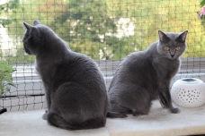 Großer Kater und kleine Katze :)