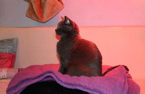 Tamy als Model unterm Rotlicht